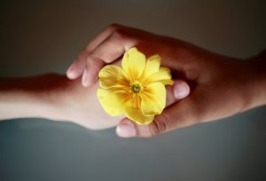 a closed hand holding a yellow flower is held in another hand