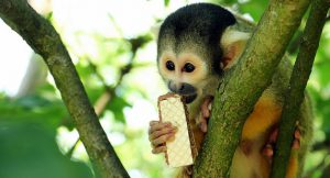 a monkey feeds on a cookie