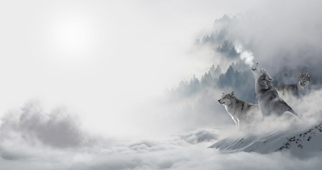 through the fog two wolves sit one howling at the moon in victory