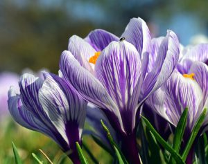 Beautiful purple and yellow flowers in full bloom