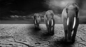 3 elephants journey across a parched desert looking for water