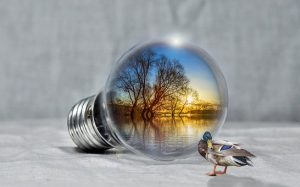 A lightbulb mirrors a creek as a duck turns its head the other way