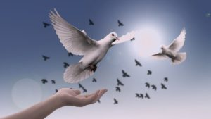 beautiful white doves released and flying to freedom